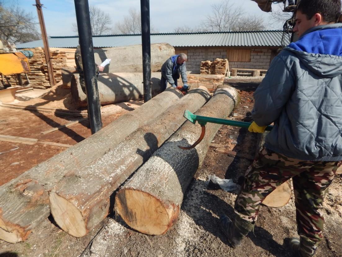 В Дигорском районе выявлены факты незаконной вырубки красного дуба. Полиция  возбудила уголовное дело // ОСнова
